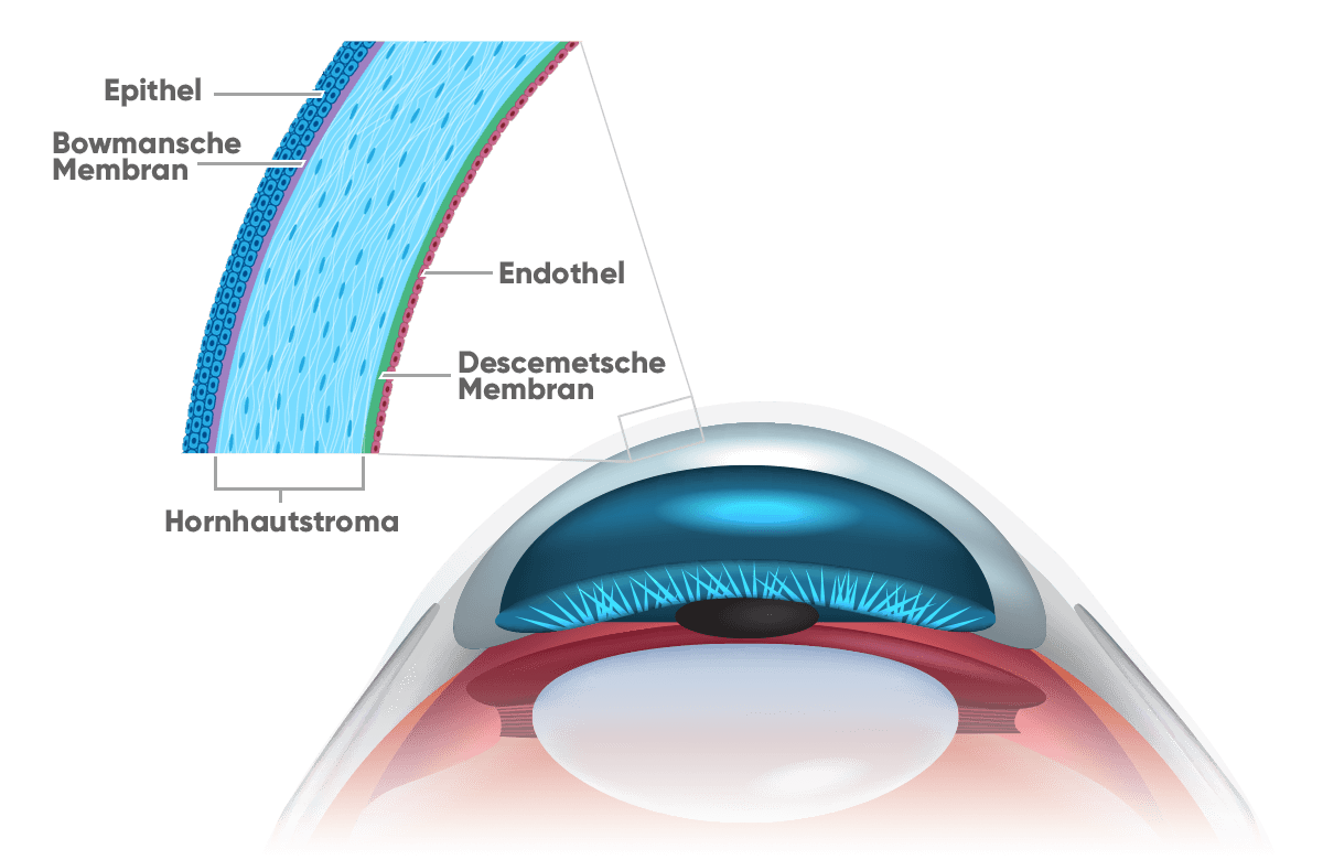 new-eye-hornhaut-layers